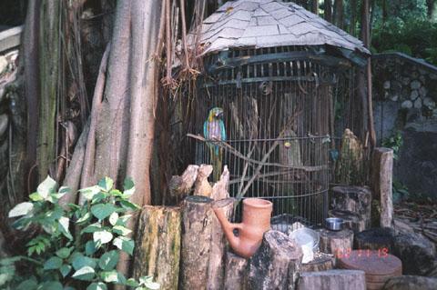 Очо Риос, Попугаи