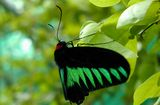 Куала Лумпур, Парк бабочек