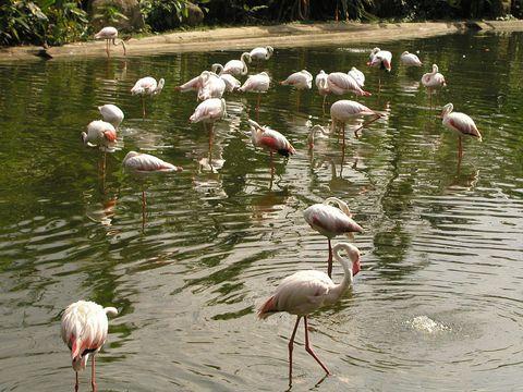 Куала Лумпур, Парк птиц