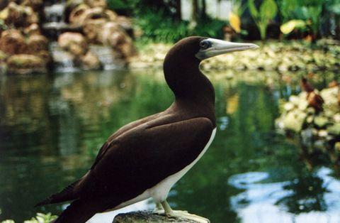 о. Лангкави, Животный мир